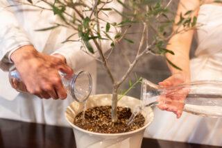 幸せを運ぶ夫婦の樹【記念樹セレモニー】がおしゃれ♪